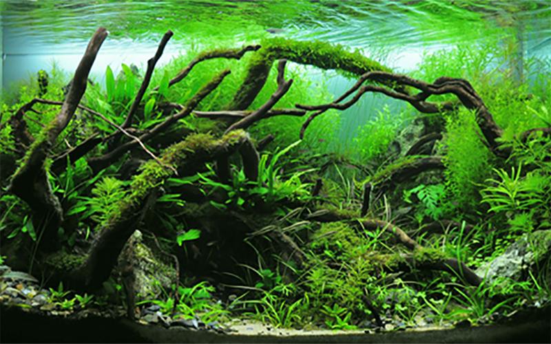ad-aquarium_3