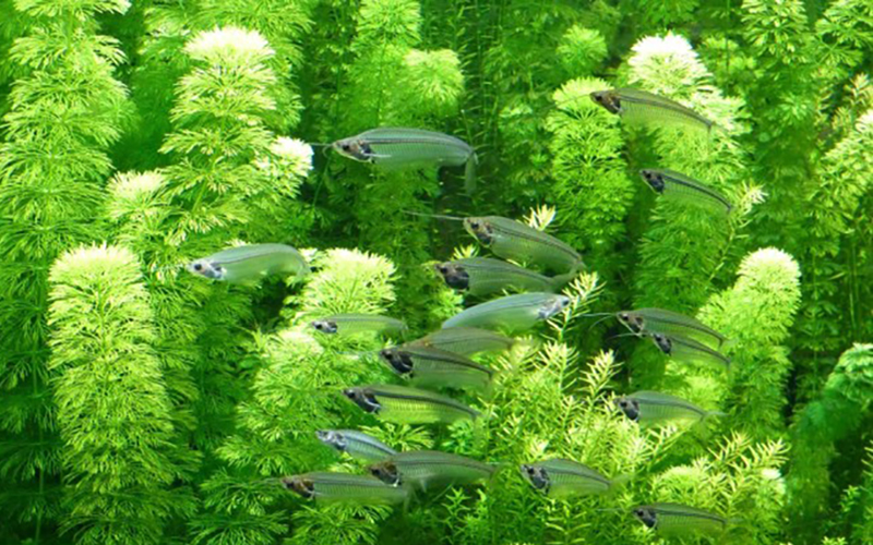 ad-aquarium_4