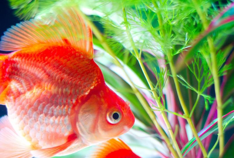 aquaticplant_2
