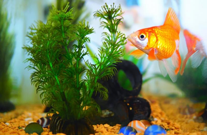 aquaticplant_4