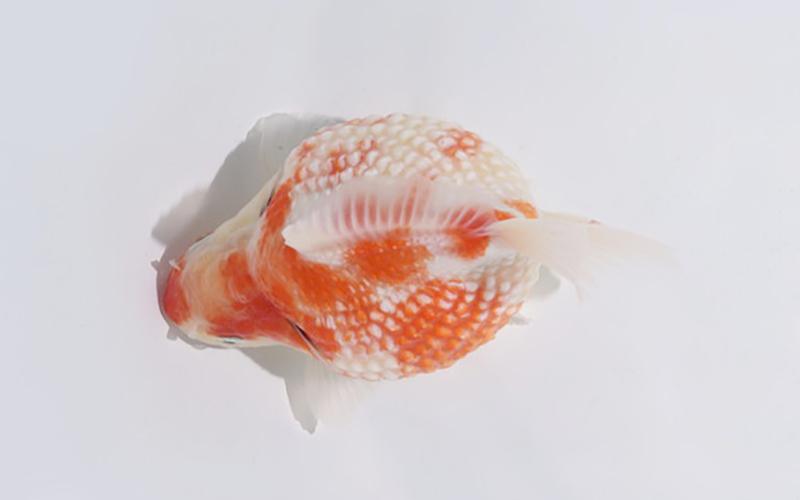 pearl_3