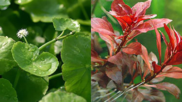 注意すべき水草に付着した農薬