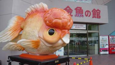 金魚の生産地5選