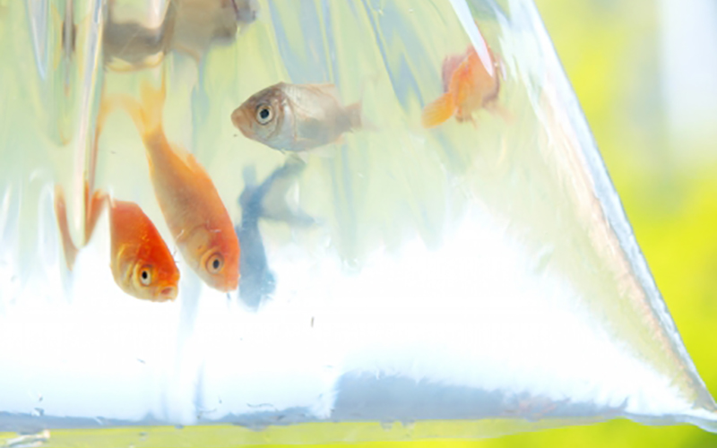 scoopfish_5