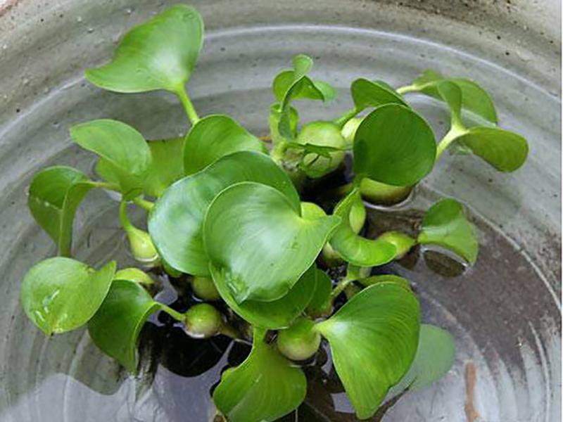 planttype_10