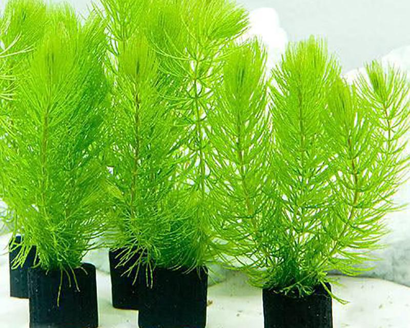planttype_4