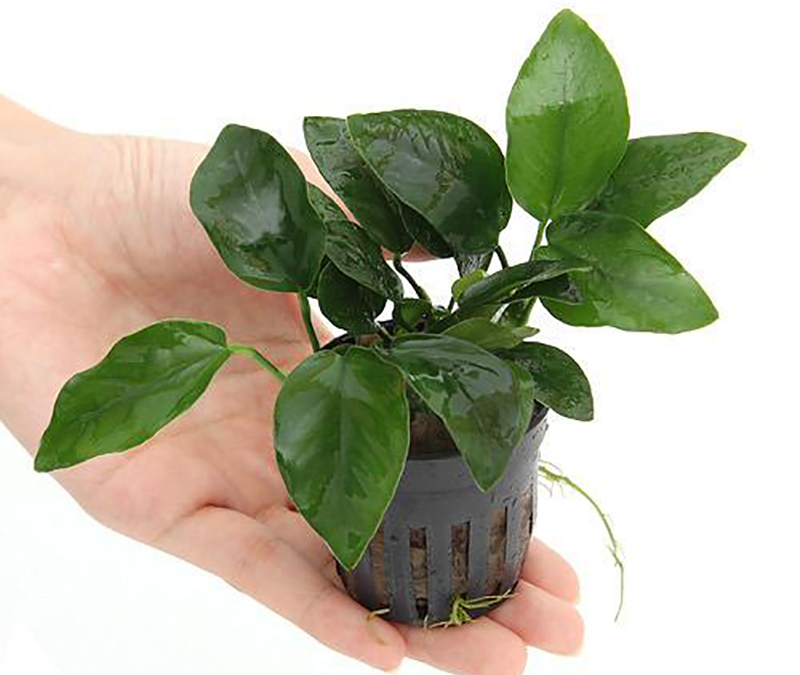 planttype_5
