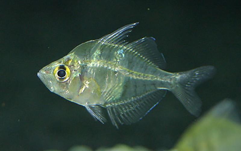 glassfish_4
