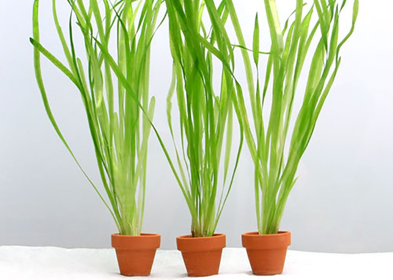 planttype_13