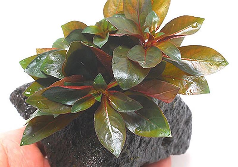 planttype_15
